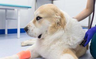 Erkrankungsanzeichen bei Hunden